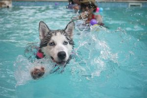 A dog splashing in a swimming pool