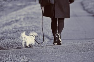 a person walking a leashed dog on a path
