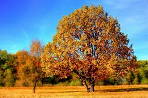 tree-99852_1920-300x199